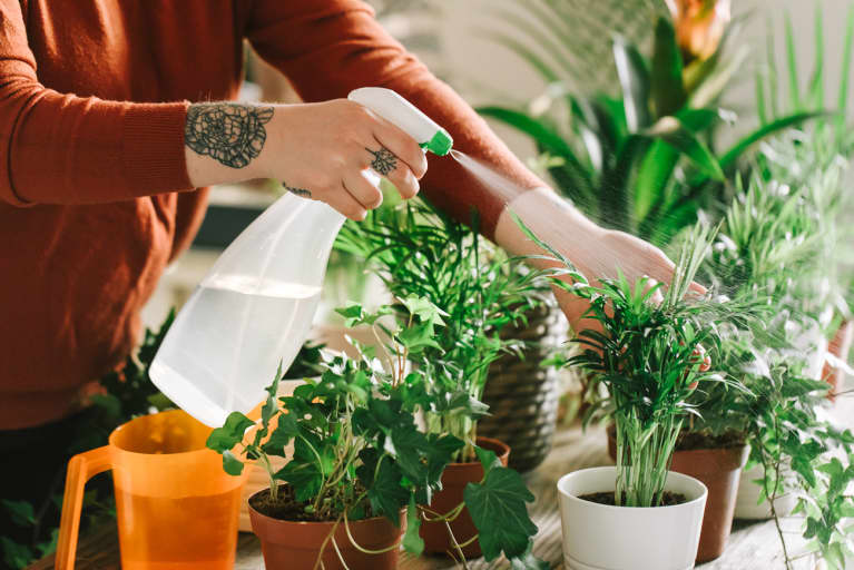 Anonymous Hands Watering House Plants With Spray Bottle
