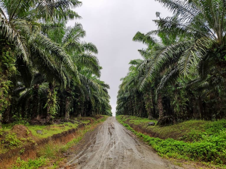 Palm Oil Production Can Actually Be Sustainable, New Study Finds