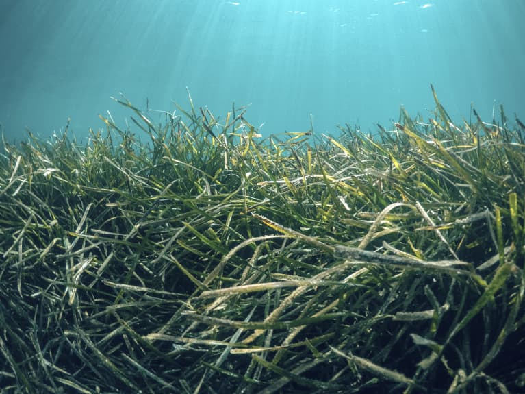 Fun Fact: Beyond Being Delicious, Seaweed Can Help Us Fight Climate Change