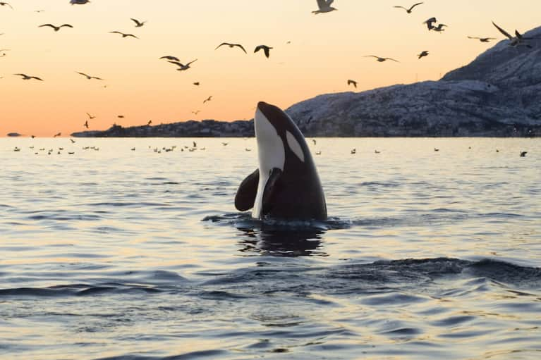 I Was A SeaWorld Trainer For 7 Years. Here's My Story