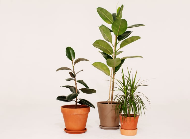 6 Ways To Fill Your Home With Houseplants On The Cheap