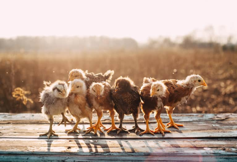 Whole Foods Just Committed To Important New Standards For Chicken