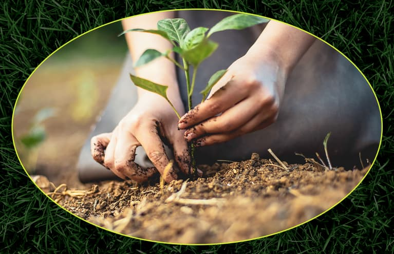 person with hands in dirt planting flower