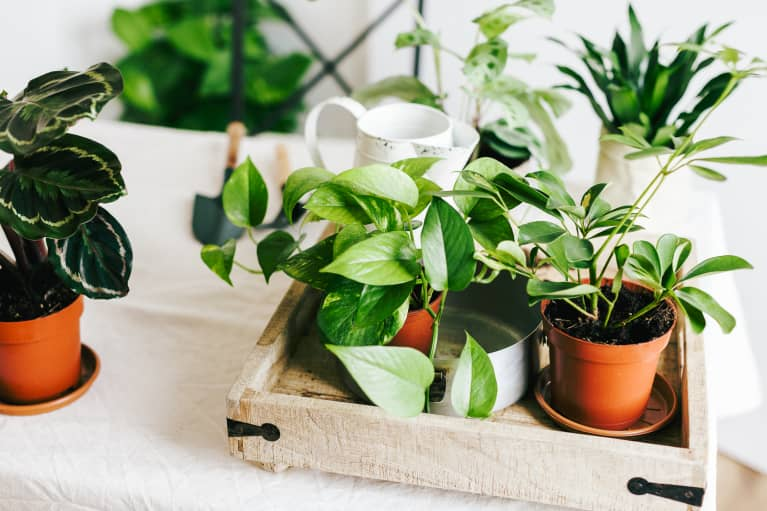 Does Your Houseplant Need Watering — Or Just A Mist? Here's How To Tell