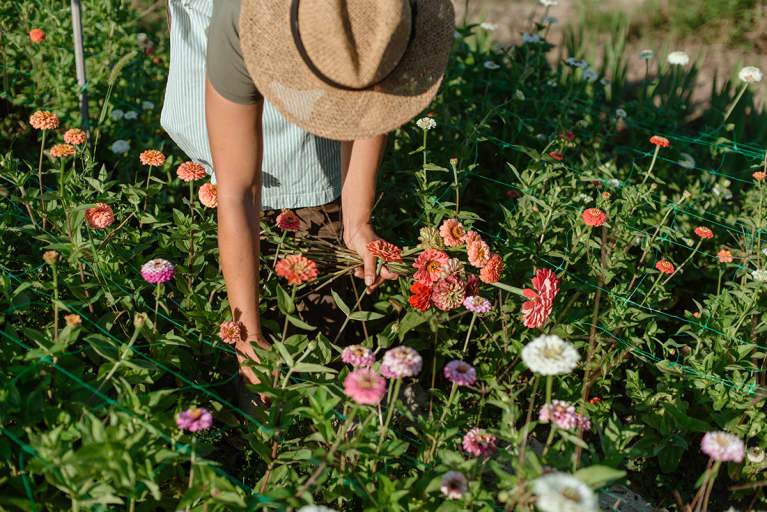 A Beginner's Guide To Growing A Vibrant Garden: 8 Plants To Start With