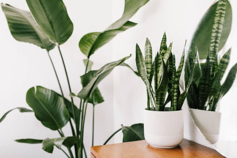 What Your Houseplants' Curling Leaves Are Trying To Tell You