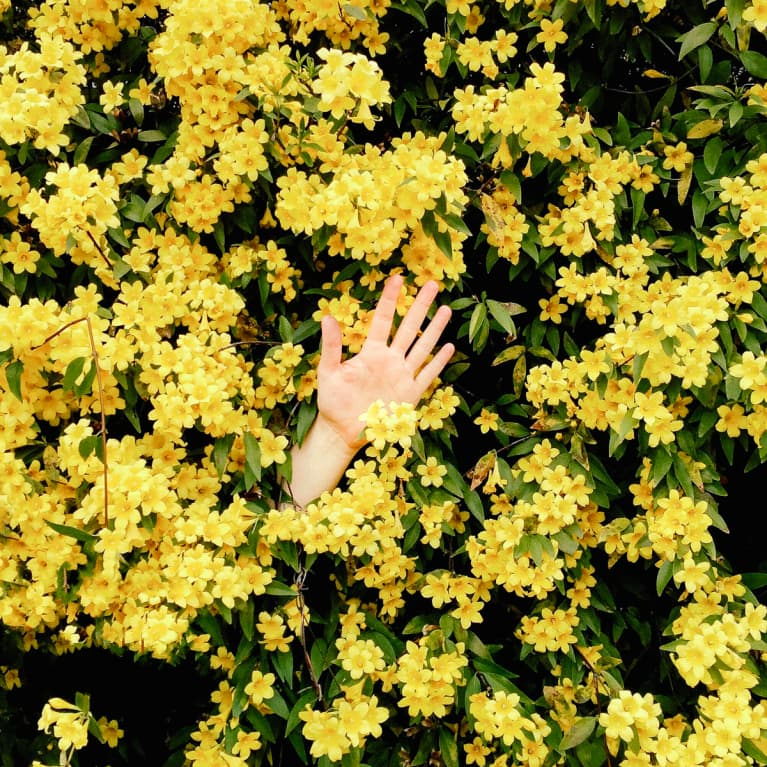 Waving hello in a bunch of flowers