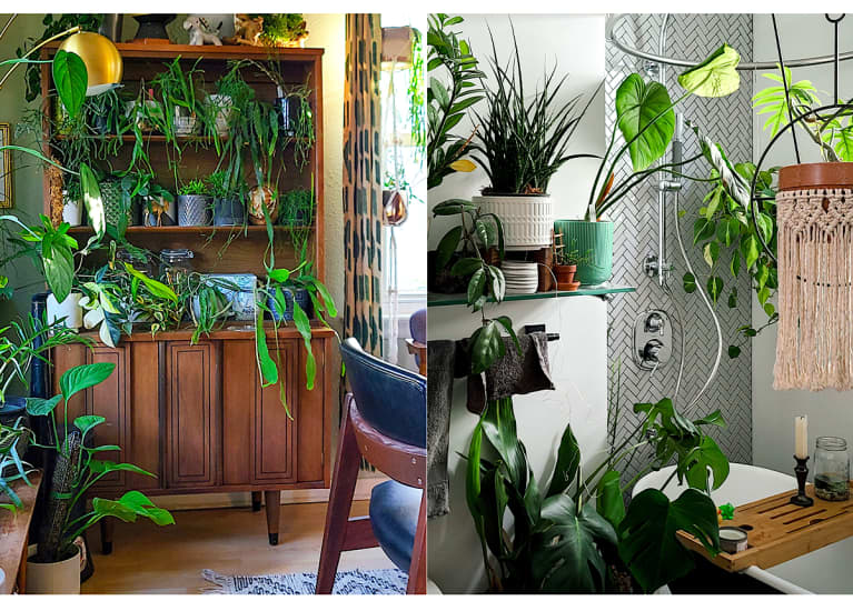 Living room and bathroom filled with green hanging and potted house plants