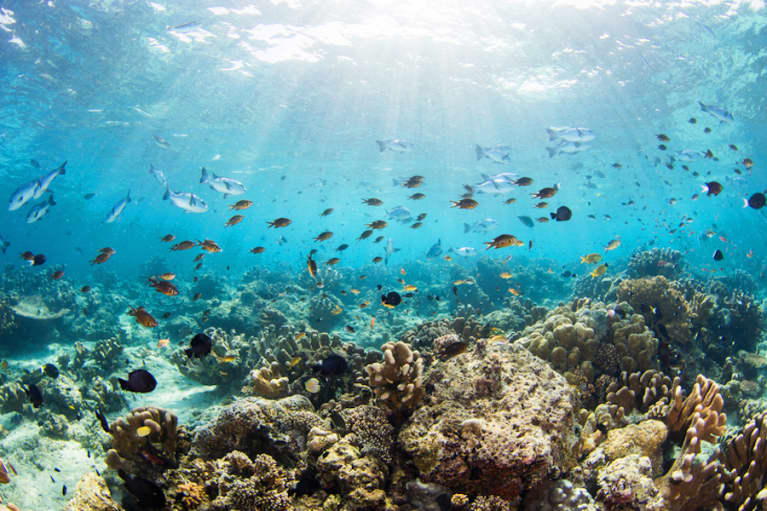 Have 5 Minutes? Here's What You Can Do For The Ocean