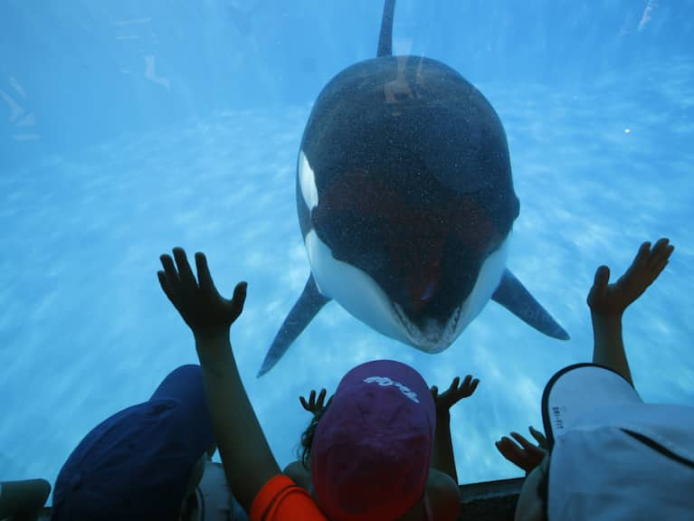 SeaWorld Is Finally Phasing Out Its Killer Whale Show