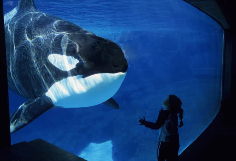 SeaWorld Will Finally Stop Breeding Whales In Captivity