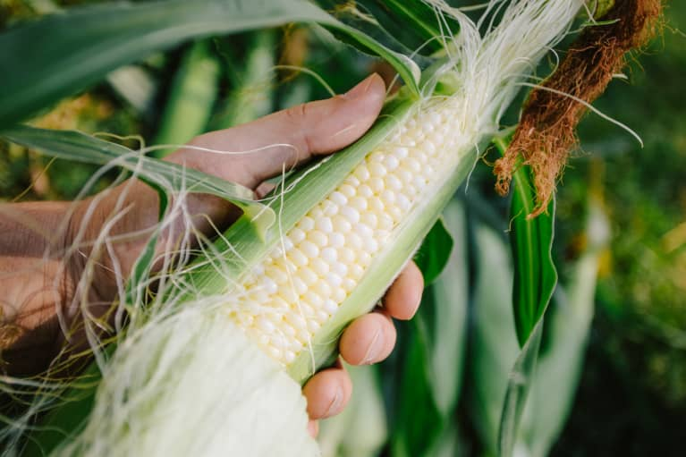 Everything You Ever Wanted To Know About Making Perfect Corn