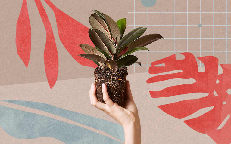 5 Plant Subscriptions That'll Keep Your Greenery Collection Growing