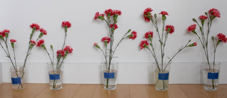 five flower vases in a row