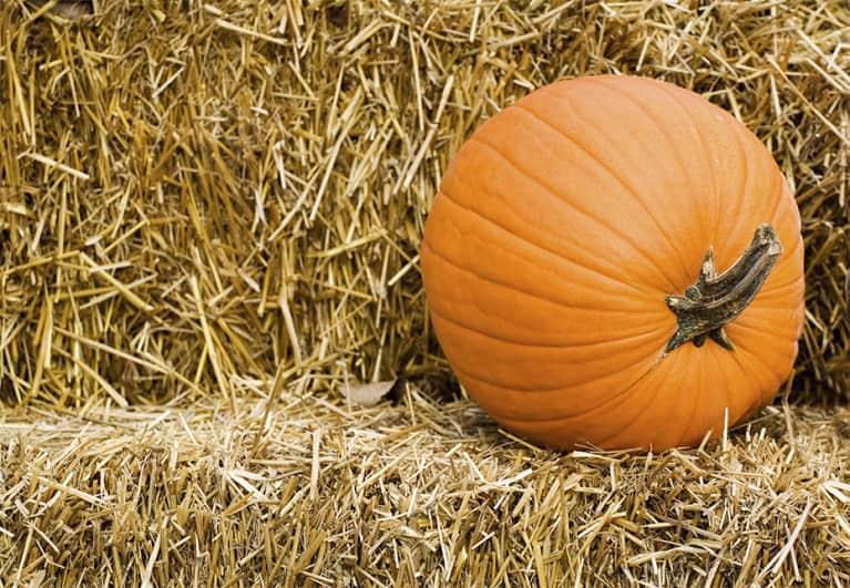 9 Exercises You Can Do With A Pumpkin (No Joke!)