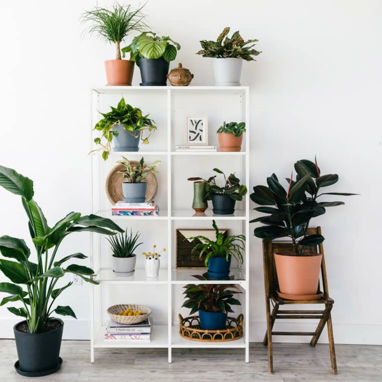 OK, So, What's The Hardest Houseplant To Kill?