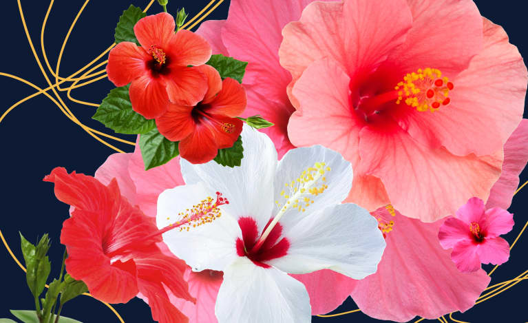 Hibiscus & Skin: 7 Benefits of Hibiscus Tea for Glowing Skin
