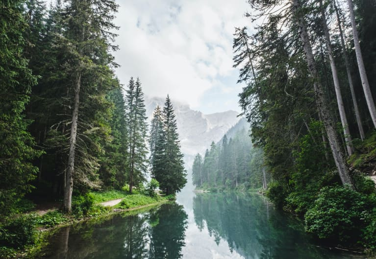 Lago di Braies forest
