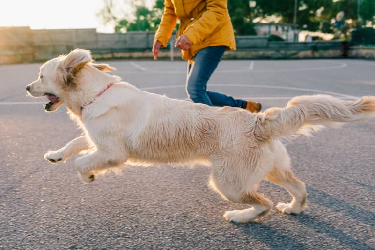 Turns Out, Having A Dog Has Surprising Benefits For Your Heart Health
