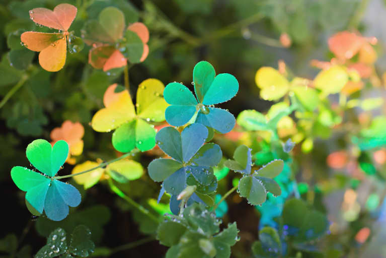Yes, You Can Cultivate Luck. Here's How