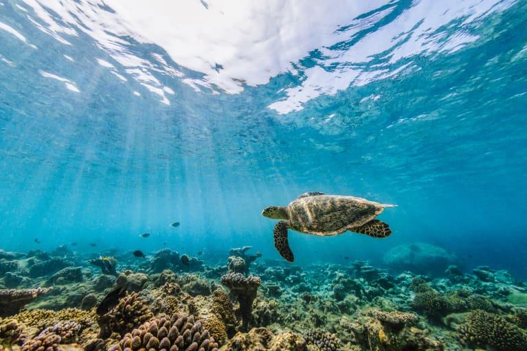 We've Put One Million Species At Risk Of Extinction, New U.N. Report Finds