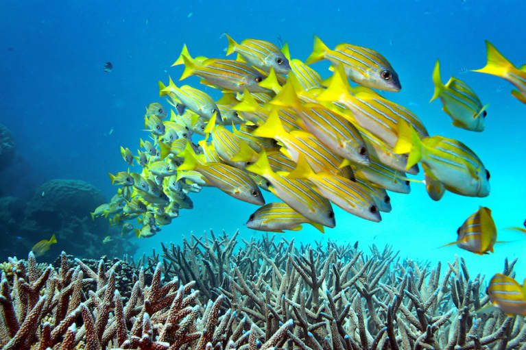 What You Need To Know About The Coral Reef Crisis