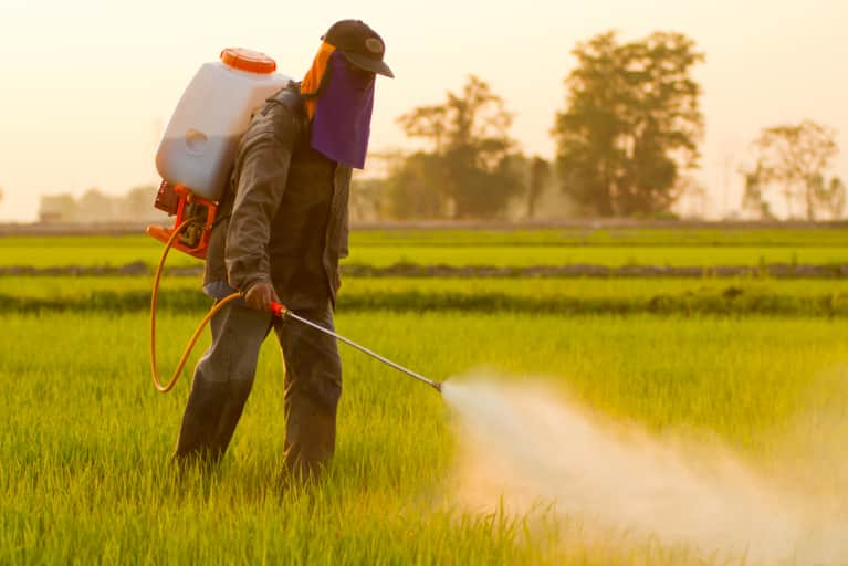 EPA Approves Dangerous Weedkiller Designed For New GMOs