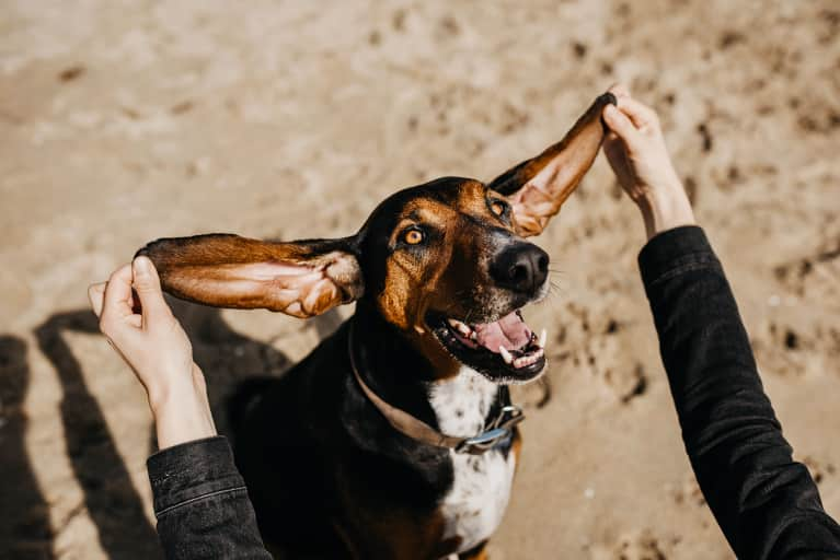 How CBD Oil Convinced My Adopted Dog That Everything Is Actually OK