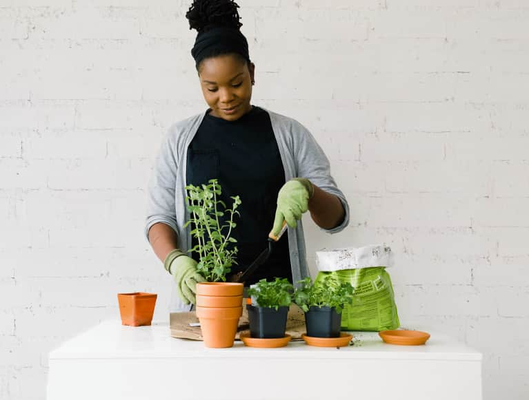A Plant Expert Answered All The Herb Gardening Questions We've Ever Had