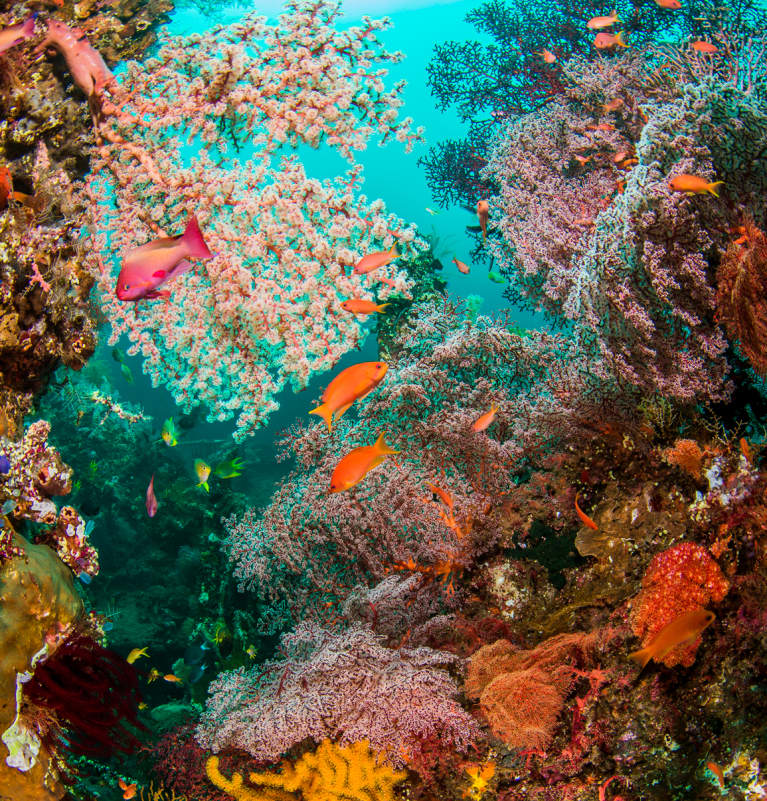 The Incredible Ways Scientists Are Rebuilding Our Coral Reefs