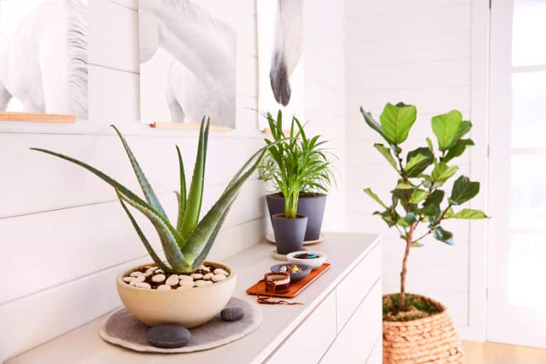 This Advice Will Keep Your Houseplants Alive Forever & Ever