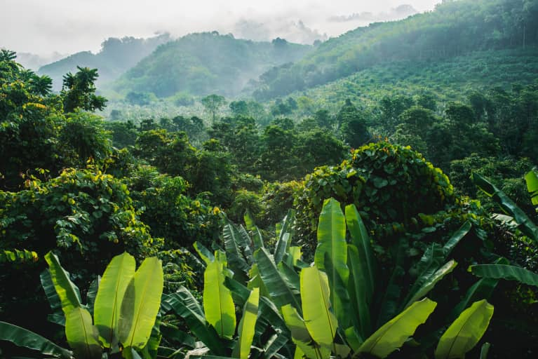 How (And Why) To Monitor Your Palm Oil Consumption