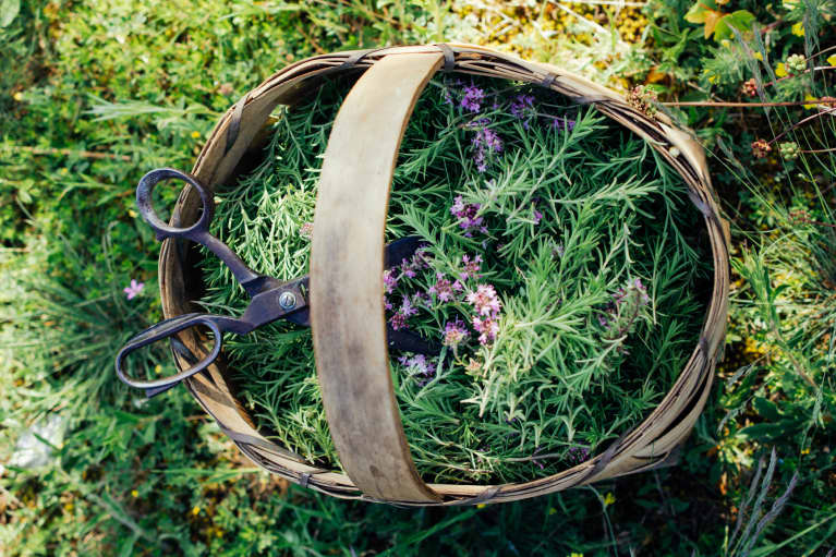 In A Stressful Situation? 7 Medicinal Herbs To The Rescue