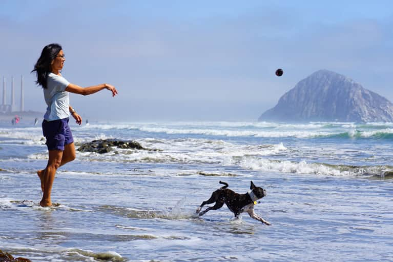 Is Getting A Dog The Best Thing You Can Do For Your Health?