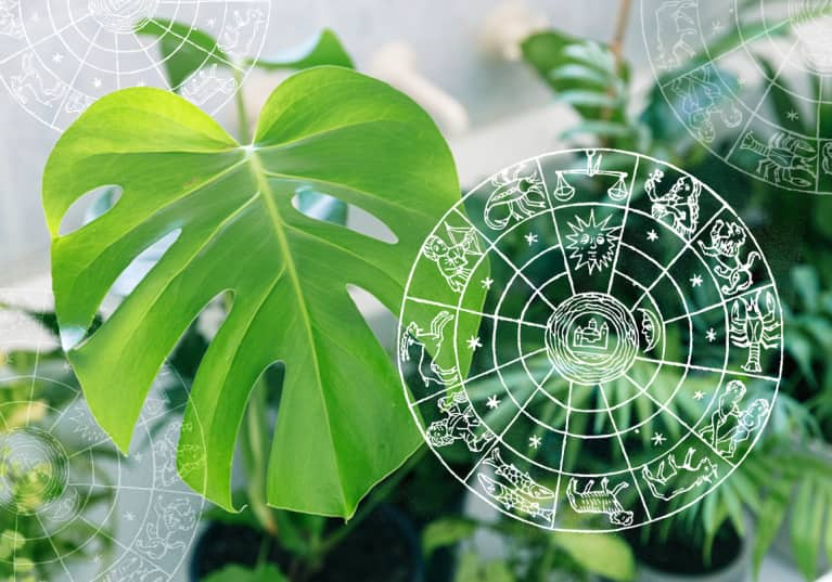 The Perfect Houseplant For Your Zodiac Sign