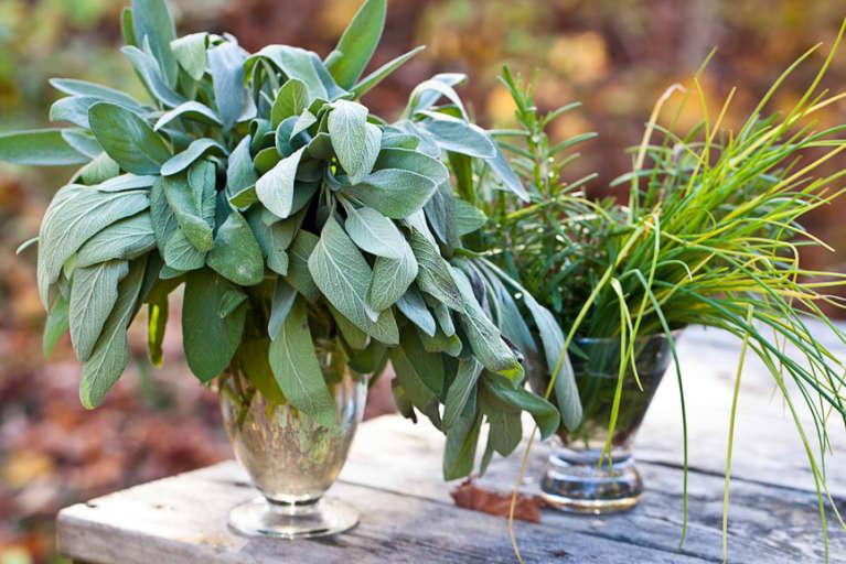 5 Herbs For A Post-Thanksgiving Dinner Detox