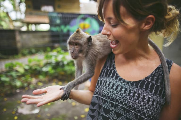 How To Help Out Animals Around The World (Other Than Donating Money)