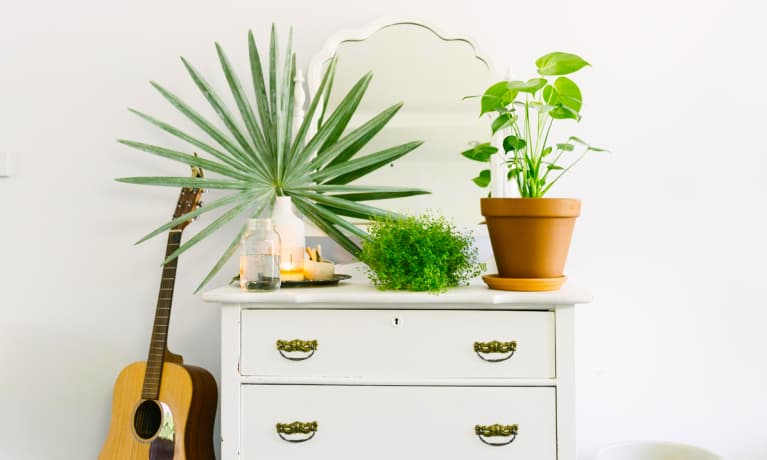 Houseplants 101: Everything You Need To Know To Start An Indoor Jungle