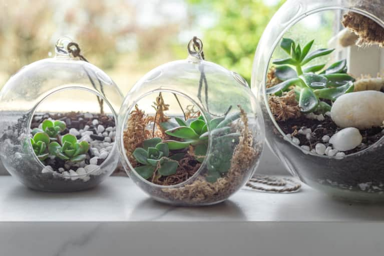 An Easy Diy Terrarium That Belongs In Your House