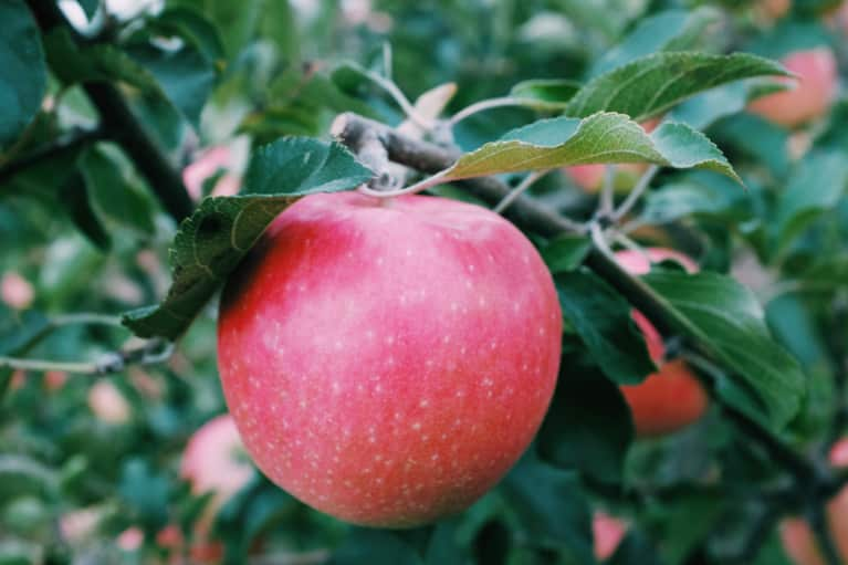 10 Scientifically Backed Health Reasons To Go Apple Picking ASAP