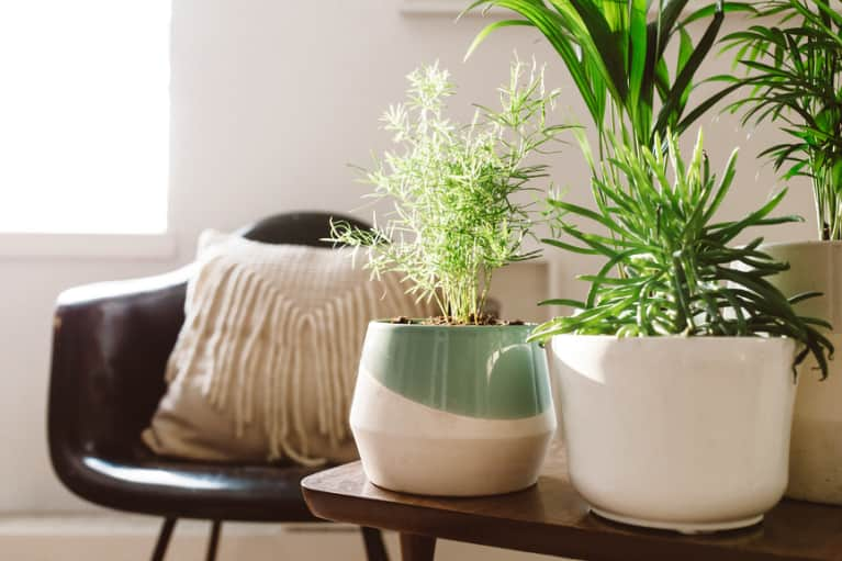A Feng Shui Healer Spills The Essentials That Should Be In Your Living Room