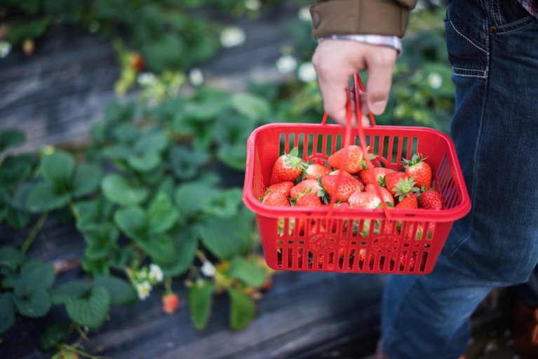 Big Win! GMO Anti-Labeling Law Is Turned Down In The Senate