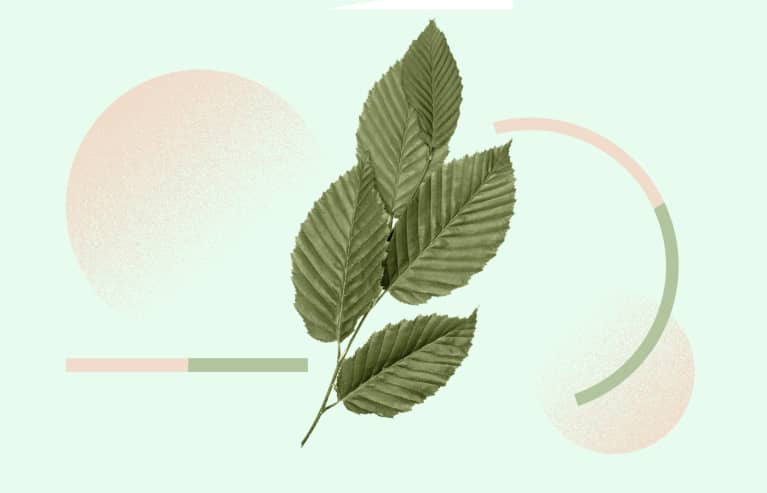 Slippery Elm: The Gut-Healing, Anxiety-Alleviating Food That Functional Docs Love — But Most People Have Never Heard Of