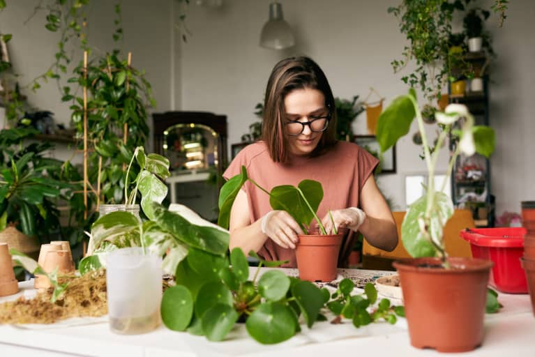 Want More Houseplants? Here's An Easy Way To Clone Your Favorites