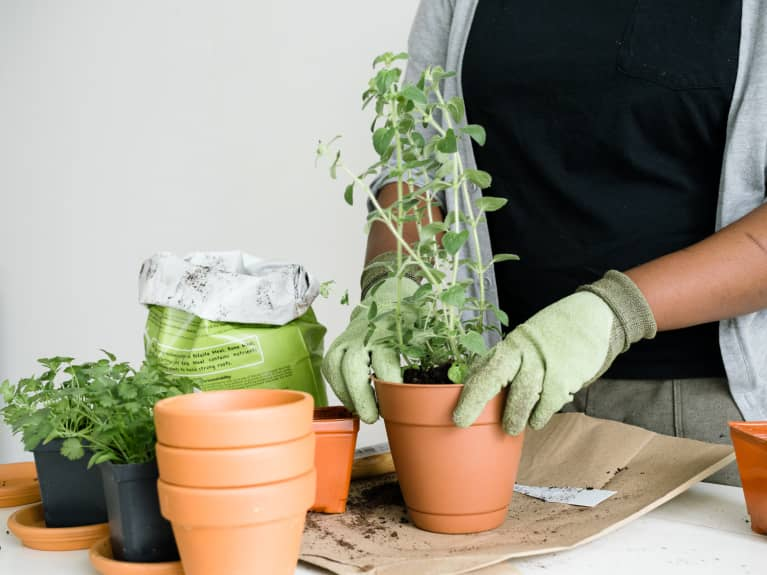 Woman repotting plants at home