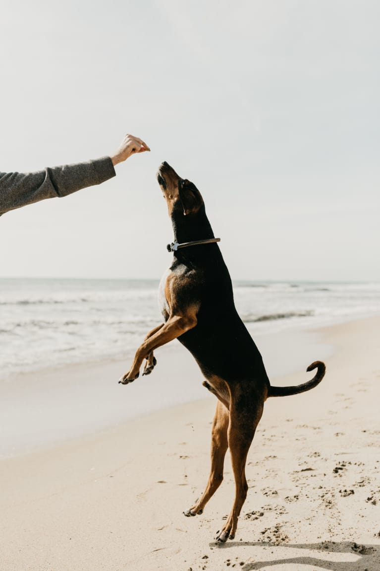 5 Ways To Know Your Dog Is Living His Best Life