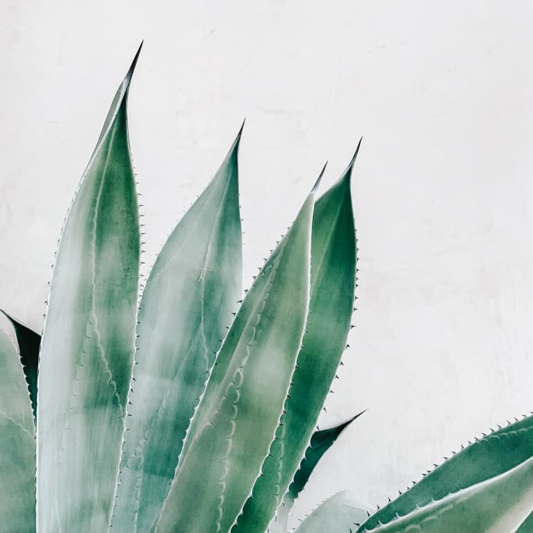 Aloe Vera Juice: Is It Worth The Hype?