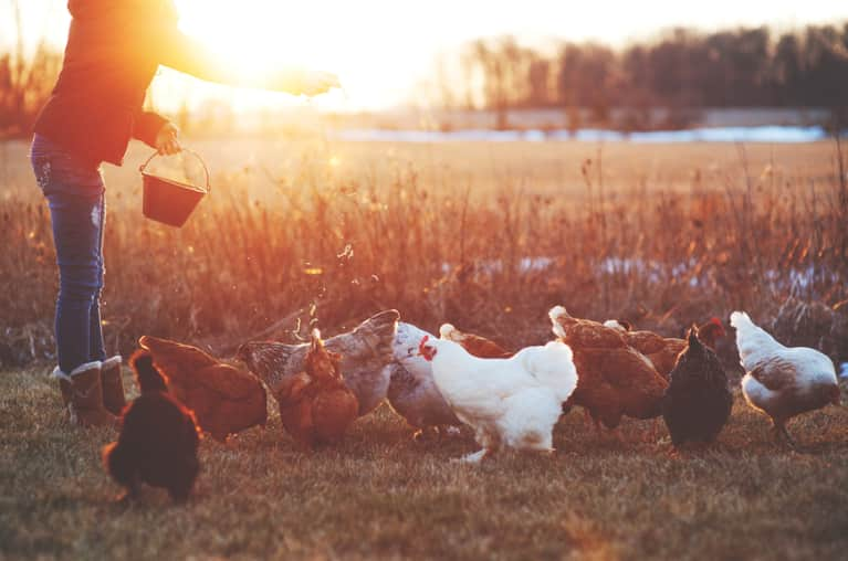 What I Wish Everyone Knew About Factory Farming