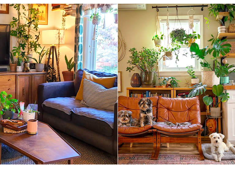 living room with a walnut table and plants, brown leather chairs and three dogs sitting.