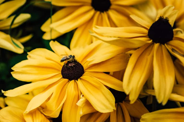 So Turns Out Bees Can Do Math — As If They Needed Another Reason To Be Amazing